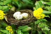 Wicker nest with eggs over green tree background — Stock Photo