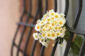 Beautiful bouquet of daisies near window outdoors — Stock Photo