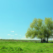 Big green tree over blue sky background — Stock Photo #75496367