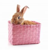 Little rabbit in wicker basket isolated on white — Stock Photo