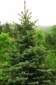 Grove of green trees over blue sky — Zdjęcie stockowe