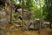 Rocks and trunks of trees — Stock Photo