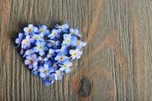 Forget-me-nots blue flowers — Stock Photo