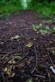 Путь в зеленом лесу — Стоковое фото