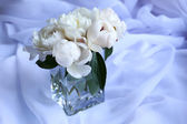 Beautiful white peonies — Stock Photo
