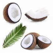 Coconut collage — Stock Photo