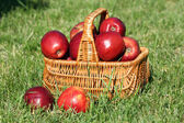 Ripe red apples in wicker basket on grass outdoors — Stock Photo