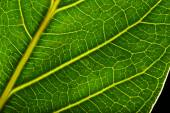 Tree green leaf close up — Stock Photo