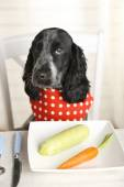 Dog looking at plate of fresh vegetables — Stock Photo