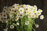 Krásnou kytici sedmikrásky — Stock fotografie