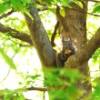 Small squirrel on branch of tree — Stock Photo #77199287