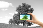 Hand taking photo of tree in field by smartphone — Stock Photo