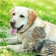 Friendly dog and cat resting over green grass background — Stock Photo #77242600