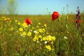 美丽的鲜花在领域 — 图库照片