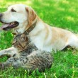 Friendly dog and cat resting over green grass background — Stock Photo #77561944