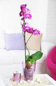 Lilas belle orchidée en pot sur la table dans la salle — Photo