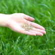 Wheat grain in female hand on green grass background — Stock Photo #77704162