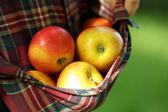 Red apple in hemline of female clothing — Stock Photo