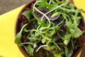 Fresh mixed green salad in bowl on table close up — Stock Photo