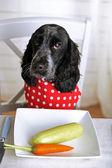 Pies patrząc na talerz warzywa świeże na stół — Zdjęcie stockowe