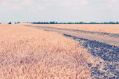 Country road in field — Stock Photo