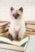 Cute little cat with books — Stock Photo