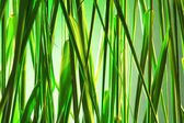 Green reeds background — Stock Photo