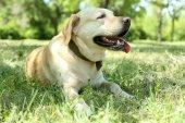Hund över grönt gräs — Stockfoto