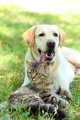 Cão e gato descansando sobre a relva verde — Fotografia Stock