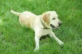 Söt hund över grönt gräs — Stockfoto