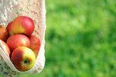 Kadın giyim, closeup boyu içinde kırmızı elma — Stok fotoğraf
