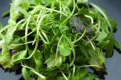 Fresh mixed green salad on plate close up — Stock Photo