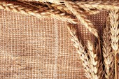 Spikelets on sackcloth background — Stock Photo