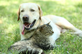 Friendly dog and cat — Stock Photo