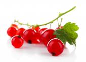 Branch of red currant with green leaf — Stock Photo