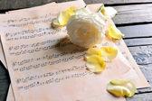 楽譜の美しいバラ — ストック写真