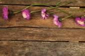 Beautiful wild flowers on wooden background — Stock Photo