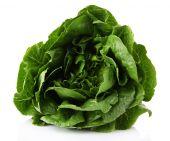 Lettuce isolated on white — Stock Photo