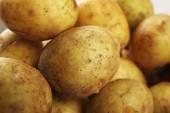 Young potatoes close up — Stock Photo