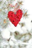 Покрытый снегом и плетеной сердечной ветвью ели, на открытом воздухе — Стоковое фото