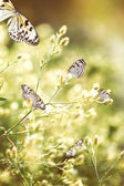 Beautiful butterflies on wildflowers — Stock Photo