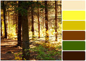 Trees in forest and palette of colors — Stock Photo