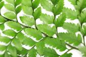 Green leaves, closeup — Stock Photo