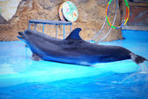 Cute dolphin in the dolphinarium — Stock Photo