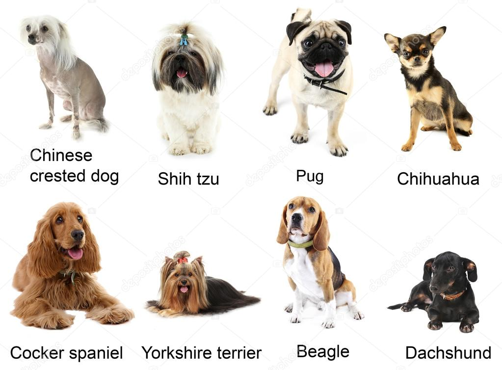 All The Different Types Of Dog Breeds