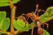 Gray cross spider (Larinioides sclopetarius) perched on tree bark. — Stock Photo