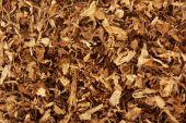 Dry smoking tobacco — Stock Photo