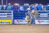 Clark county fair en rodeo — Stockfoto