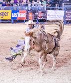 Helldorado dagar rodeo — Stockfoto