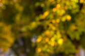 Natural bokeh background in the autumn park. Intentional motion  — Stok fotoğraf